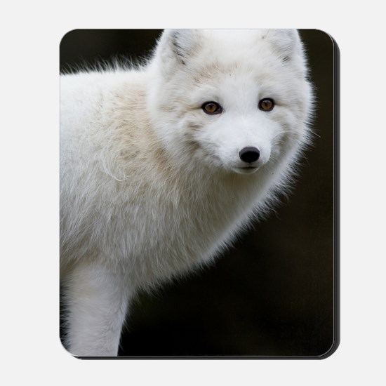 Artic Fox Mousepad