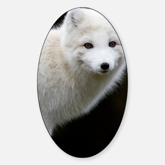 Artic Fox Sticker (Oval)