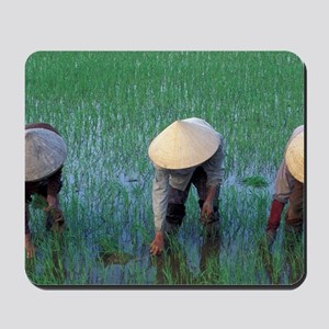 Farmers plant seedlings in rice paddy, S Mousepad