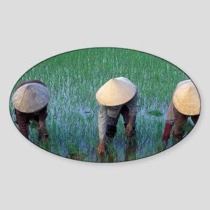 Farmers plant seedlings in rice pad Sticker (Oval)
