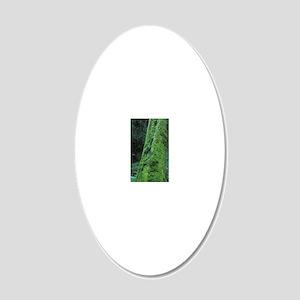 Rainforest, Lake Te Anau, So 20x12 Oval Wall Decal