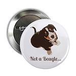 Not a Beagle - Entlebucher Mountain Dog 2.25