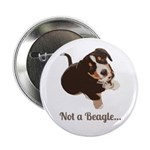 Not a Beagle - Entlebucher Mountain Dog 2.25