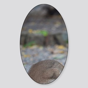Wallaby eating tasty piece of fruit Sticker (Oval)