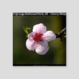 "Cherry Blossom Photograph Square Sticker 3"" x 3"""