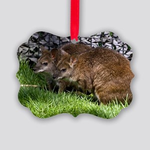 (3) Wallabies Picture Ornament