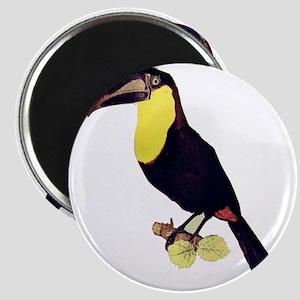 toucan Magnet