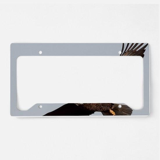 x14  5 License Plate Holder
