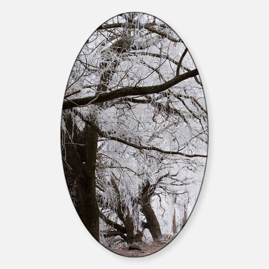 Hoar Frost and Road by Butchers Dam Sticker (Oval)