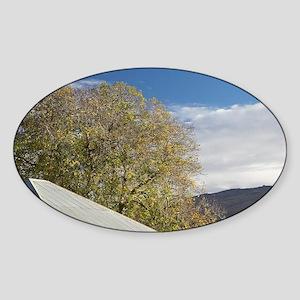 Domain Road Vineyard Sticker (Oval)