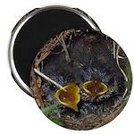 "Birds 2.25"" Magnet (10 pack)"