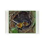 Birds Rectangle Magnet