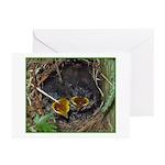 Birds Greeting Cards (Pk of 10)