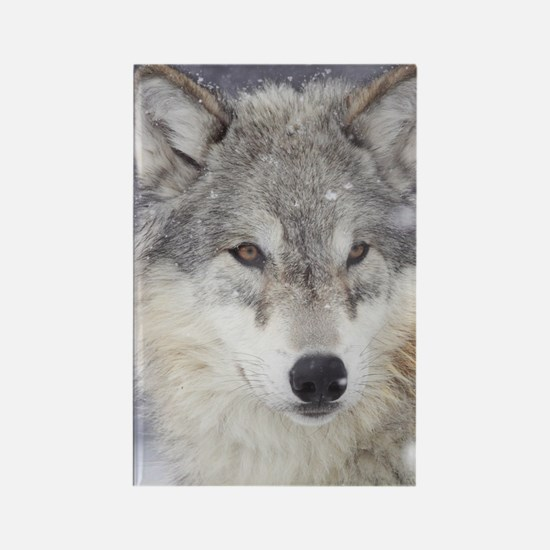 ms  Wolf Rectangle Magnet