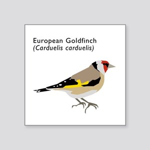 "european goldfinch Square Sticker 3"" x 3"""