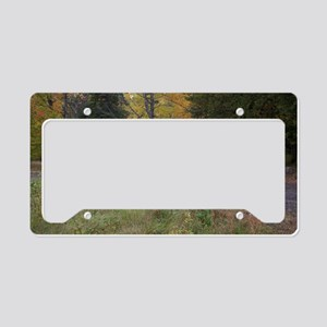 fallcolorssafarisz License Plate Holder