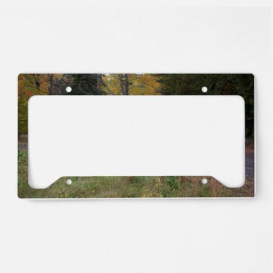 fallcolorssafarisz License Plate Holder