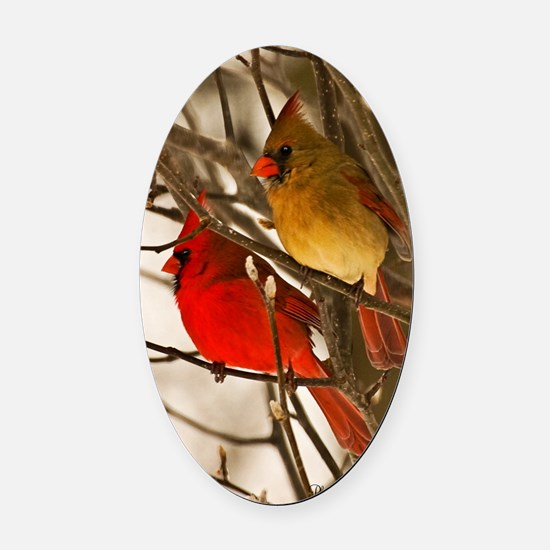 cardinals2poster Oval Car Magnet