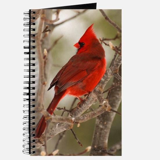 cardinal1pster Journal