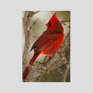 cardinal1pster Rectangle Magnet