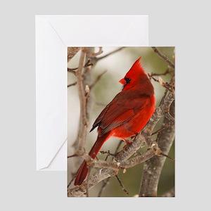 cardinal1pster Greeting Card
