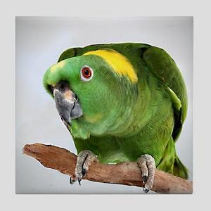 Amazon Parrot ile Coaster