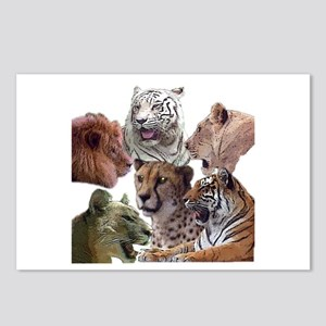 big cats Postcards (Package of 8)