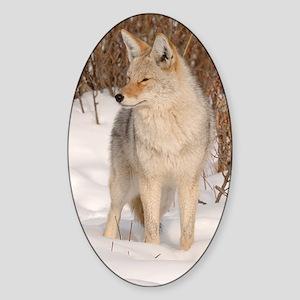 x14  Coyote 048 Sticker (Oval)