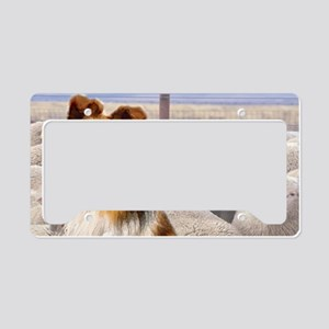 shelty with sheep2 License Plate Holder