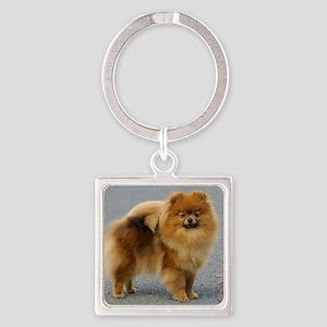 Pomeranian 9R042D-22 Square Keychain