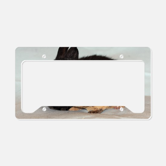 guineapig_bunny1 License Plate Holder