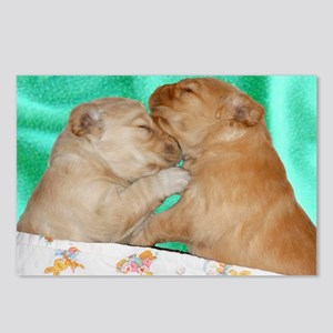 Golden Retriever Puppies  Postcards (Package of 8)