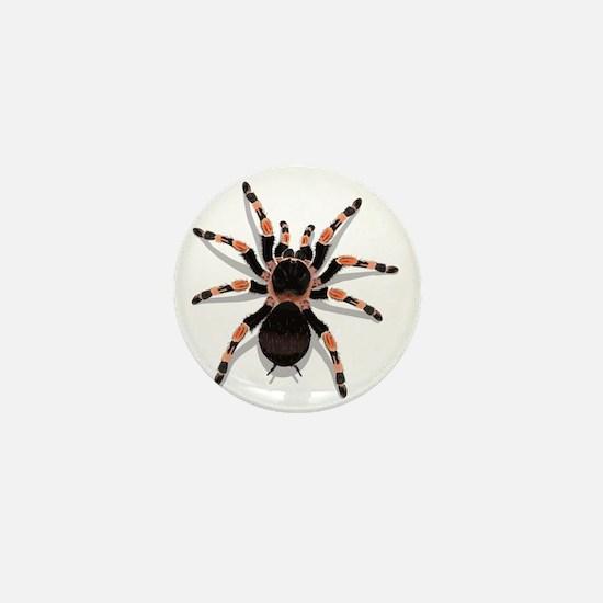 tarantula_CP Mini Button