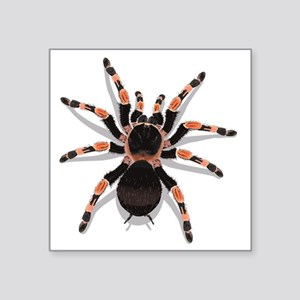 "tarantula_CP Square Sticker 3"" x 3"""