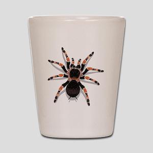 tarantula_CP Shot Glass