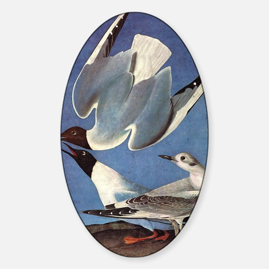 audubon 2 Sticker (Oval)