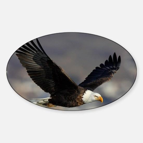 x14W  highfly Sticker (Oval)