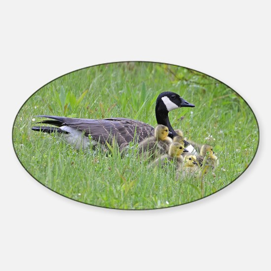 Goslings with mom Sticker (Oval)