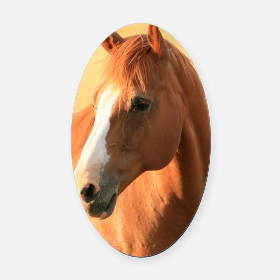horse Oval Car Magnet