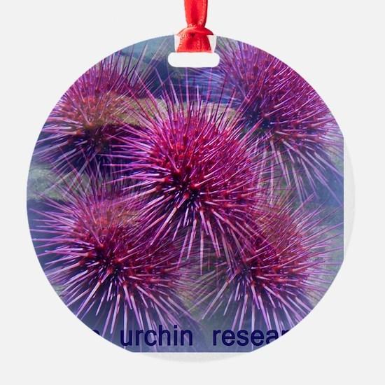Sea urchin research Ornament