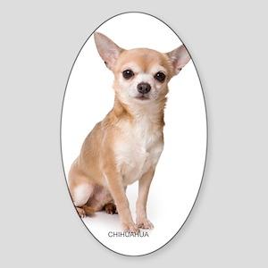 chihuahua311 Sticker (Oval)