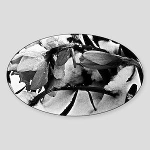 beautycold9x12 Sticker (Oval)