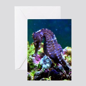 Mustang Male - Shy Boy I Greeting Card