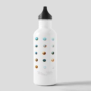 Bird Eggs of New Engla Stainless Water Bottle 1.0L