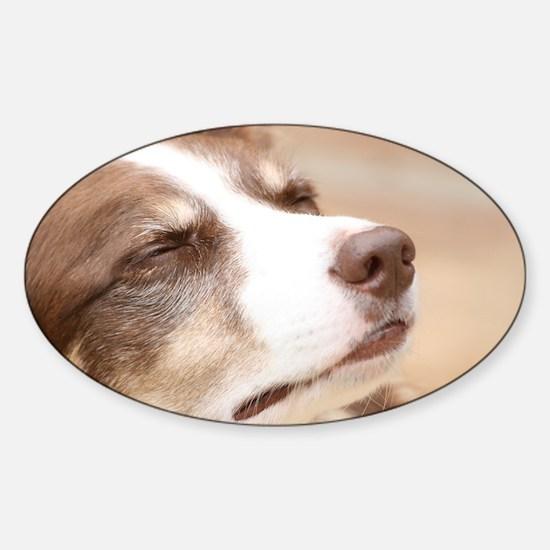 Border Collie Sticker (Oval)