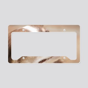 Border Collie License Plate Holder