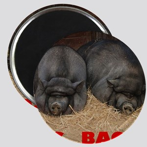 Pot_Bellied_Pigs_Big_Bacon_10by10 Magnet