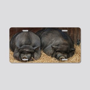Pot Bellied Pigs Lisbon Zoo Aluminum License Plate