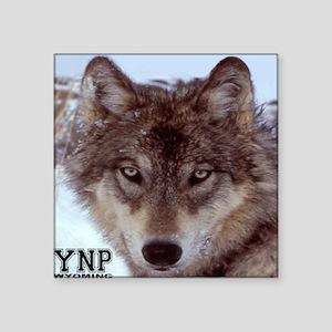 "wolf_YNP_wyoming Square Sticker 3"" x 3"""