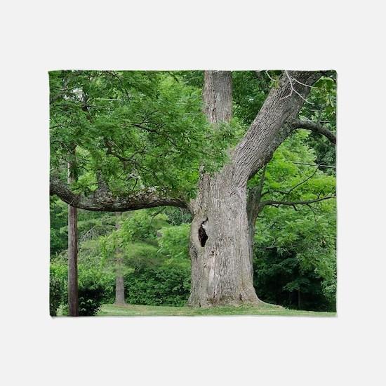 Hollow Oak Tree on Western Campus Throw Blanket